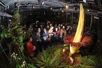 Listopad 2012: Zmijovec a návštěvníci botanické zahrady ve švýcarské Basileji.