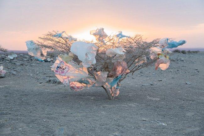 Akácie chrastí pod plastovými odpadky, které odhodili kolemjdoucí. Koznačení běženců, uprchlíků, migrujících dělníků ajiných, kteří putují pouští, používají afarští kočovníci výraz hahai, lidé větru