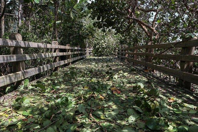 Ničivé záplavy a vichřice provázející hurikán Irma zdevastovaly značnou část Floridy.