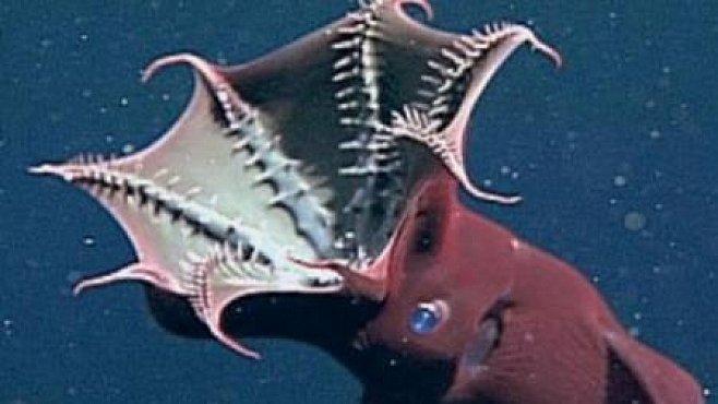 VIDEO: Tajemství upírské chobotnice odhaleno
