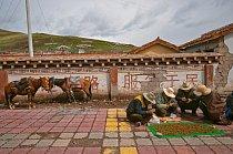 """Každý den během sběračské sezony přicházejí tibetští prodejci do Šeršülu se svou dávkou """"červů""""."""