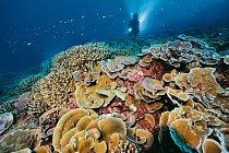 Zatímco najiných místech nasvětě jsou koráli zničeni blednutím anemocemi, útesy jižních Liniových ostrovů zůstávají zdravé. Podle odborníků jsou klíčem kzdraví korálů zdravé ekosystémy, vnichž hr