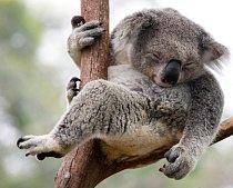 Býložravci spí ve skupinách a mají mnohem lehčí a kratší spánek než masožravci.