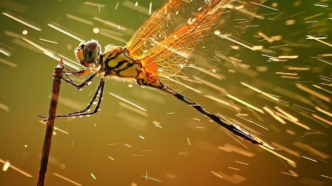 Exkluzivně: Nejkrásnější fotografie roku podle National Geographic
