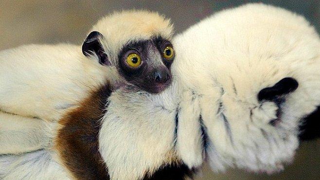 OBRAZEM: Nejkrásnější jarní mláďata ze zoo z celého světa