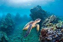 V dnešní době je na světě asi 300 druhů želv, některé z nich jsou silně ohrožené.