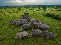V ugandském Národním parku Queen Elizabeth se sloni mohou potulovat savanou. Po období intenzivního pytlačení v 80. letech počet slonů prudce vzrostl a  nyní jich zde žije 2500. Mimo chráněné oblasti