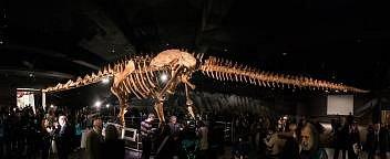 Panoramatický snímek je sestaven zřady fotografií a zachycuje rekonstruovanou kostru mohutného titanosaura ze skupiny sauropodů.
