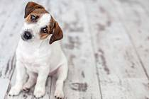 Jak moc se psí inteligence přeceňuje?