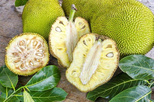 V průměru váží plody chlebovníku 16 kilogramů, dorůst však mohou až do váhy 80 kilogramů.