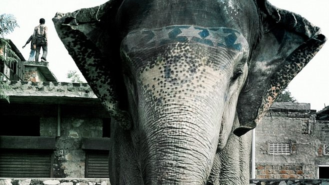 Hathi Gaon v Indii. Vesnice, kde vládnou sloni