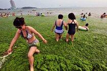 Lidé se snaží plavat v moři mezi mořskými řasami ve městě Qingdao v Číně.