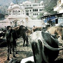 Lidé i zvířata v souladu, prožívají své každodenní rituály a hrátky.