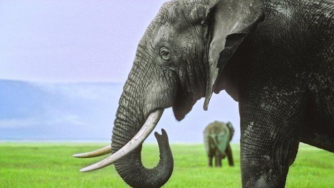 Za jak dlouho se z myši stane slon? Stačí k tomu pouhých 24 milionů generací