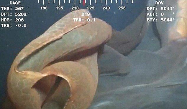 VIDEO, které vzrušilo svět. Co za tvora to plave v oceánu?
