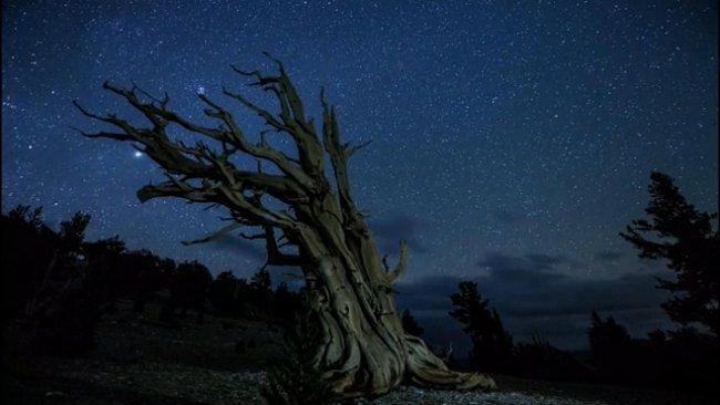 VIDEO: Perseidy nad Joshua Tree. Časosběr z říše snů