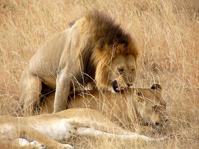 Láska mezi zvířaty
