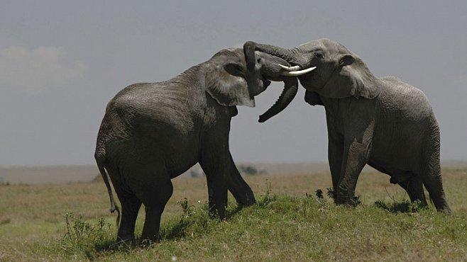 Den 6. – Rozzlobené slonice