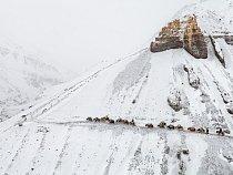 Vysoko nad hranicí lesa scházejí v zimě obchodníci s karavanou jaků, jejichž kopyta jsou dobře uzpůsobená pro chůzi po nerovných, kluzkých stezkách, hluboko do údolí.