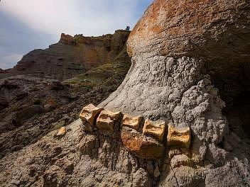 Povrchová vrstva sedimentů působením dešťů a větrů zvolna zvětrává a obnažuje fosilie dinosaurů, které jsou tvořeny ztvrdších materiálů a byly až dosud skryté pod povrchem. Snímek zachycuje šedesáticentimetrový kus ocasu kachnozobého hadrosaura.