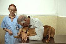 Během těchto emotivních setkání si nemohl nevšimnout propojení mezi člověkem a psem.