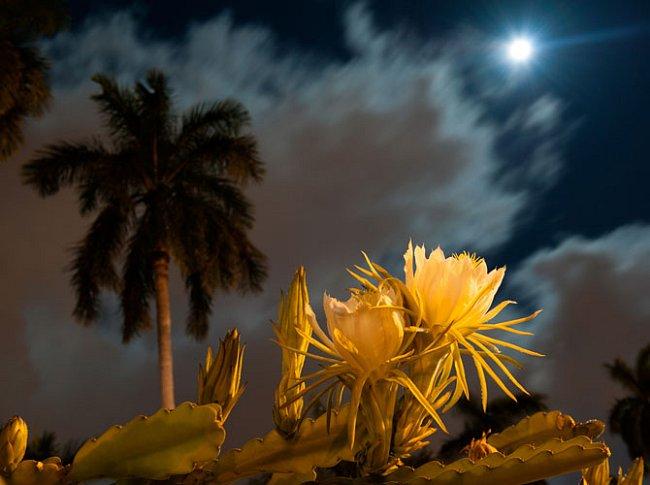 Je-li zahrada místem, kde se snažíme stvořit ráj, pak se naše touha možná nejlépe naplní právě v noci. Měsíc shovívavě promíjí zmar rostlin, který slunce dokáže obnažit v plné ošklivosti.