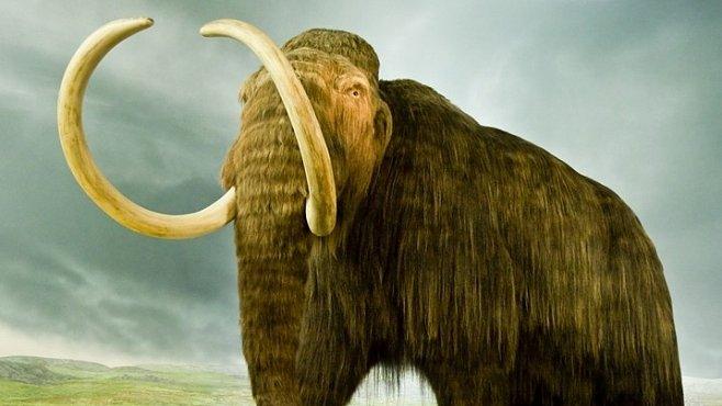 Mamutí pohřebiště v Srbsku ukrývalo ostatky několika mamutů. Jsou staré až 100 000 let