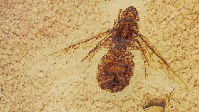 Mravenec větší než pták: paleontologické Pompeje vydaly unikátní nálezy