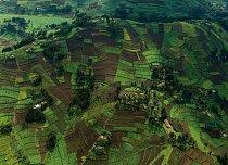Při pohledu shora je to idylický pohled; překrásná pole v horách na severozápadě Rwandy. Ale pravda je mnohem drsnější: Země je zde tak vzácná, že farmáři bojují o každý čtvereční decimetr zeminy. A t