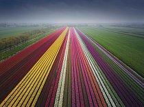 Dronem nad tulipánovým polem