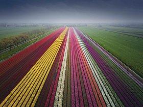 Profesionální fotograf Albert Dros fotí tulipány už několik let.
