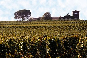 Wine_Tour_zdroj_foto_Global_Wines