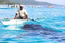 Rybář krmící žraloka velrybího