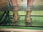 Rybičky Garra Rufa pocházejí z Turecka a procedura spočívá v oždibování mikrošupin na chodidlech