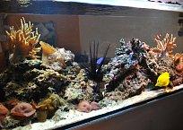 Jednou z dominant tohoto bytu je akvárium