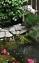 Kočka Vločka polehává nad rybníčkem