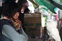 Kakadu bílý s budoucí majitelkou