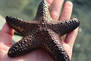 Hvězdice najdete na Filipínách na každém kroku.