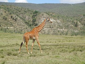 Národní park Hell's gate v Keni