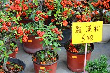 Hrnkové květiny, květinový trh