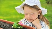 Choulostivé rostliny je lepší vysazovat až po 15. květnu, například ledovky - Begonia semperflorens.