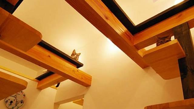 Dům pro kočky