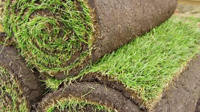 travní koberce usnadní založení trávníku