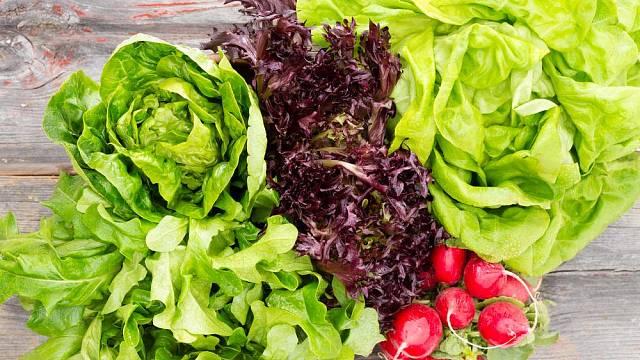 rany salat