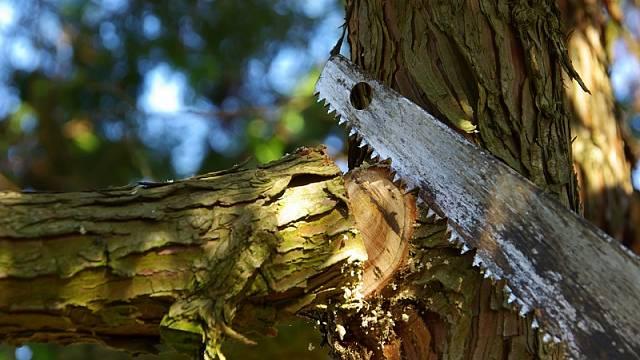 Řezání stromů 2