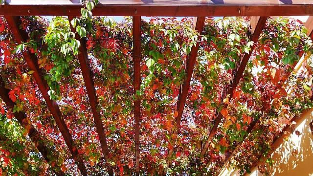 Loubinec se na podzim čarokrásně zbarví.