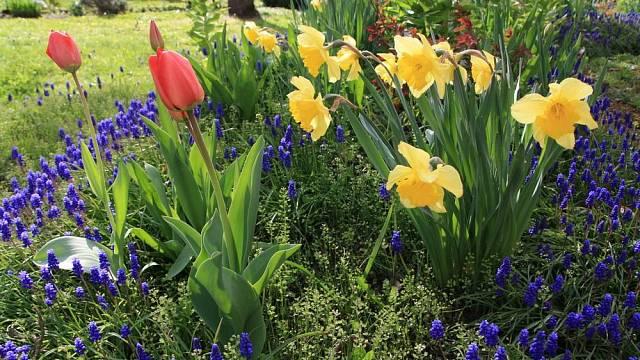Čas sázet tulipány: ozdoby jarních záhonů