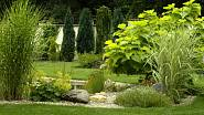 Velké listy v zahradě vytváří zajímavý kontrast