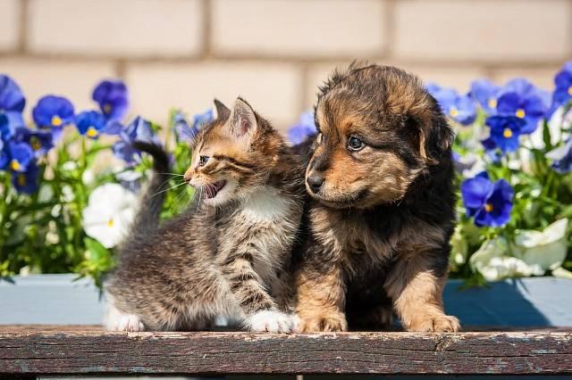 Spojencem proti kuně vám budou pes či kočka na zahradě.