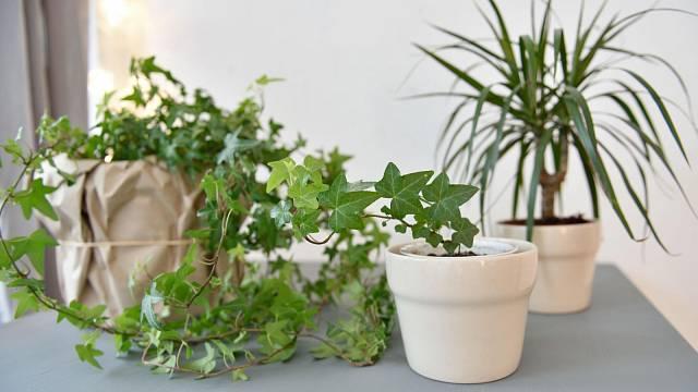 Pokojové rostliny zkrášlují okenní parapety